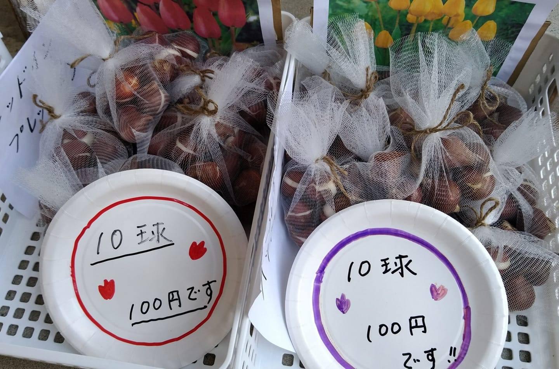 チューリップ球根の販売