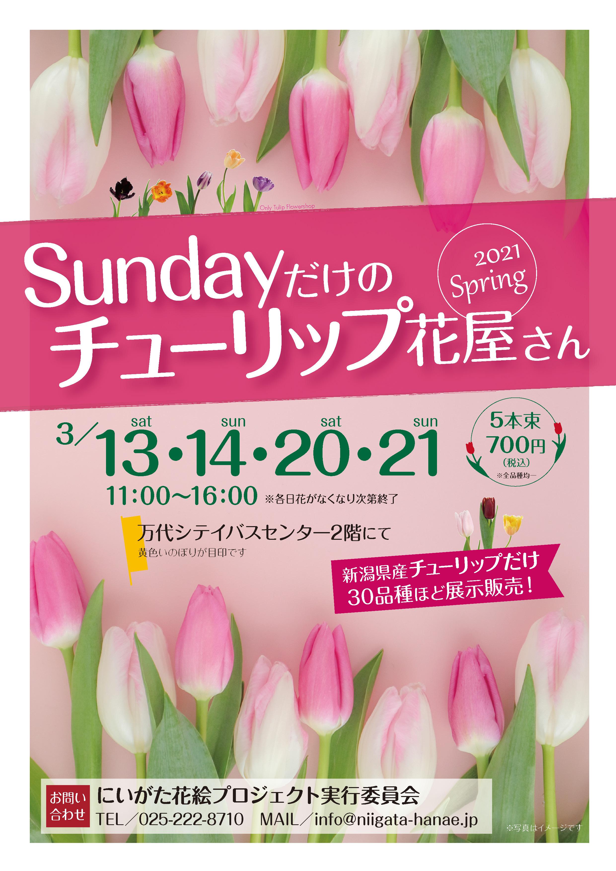 Sundayだけのチューリップ花屋さんチラシ